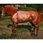 [Tier 4] Horse