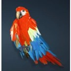 [Tier 1] Scarlet Macaw