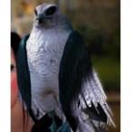 [Tier 3] Sky Hawk