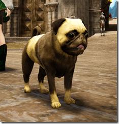 chubbydog