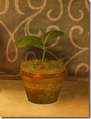 BDO_Hebatate-Sprout-2