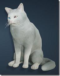 White Shorthair Cat