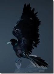 Crow Side