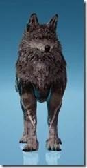 Borrum Wolf Front