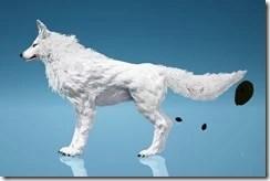 Sylvian Wolf Side