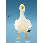 Flondor Duck