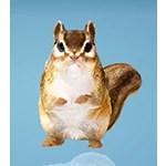 Phoniel Squirrel