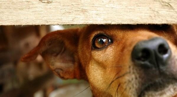 Zsebünkbe nyúlunk, ha kutyákról van szó: 13 millió Ft gyűlt össze rászoruló ebeknek