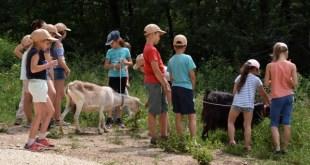 Már lehet jelentkezni a Budakeszi Vadaspark napközis táboraiba