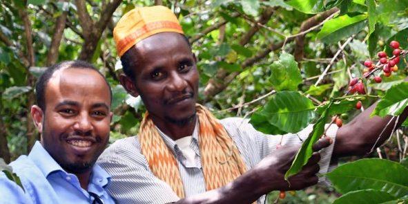 3 ok, amiért érdemes Esőerdő Szövetség által minősített kávét vásárolni