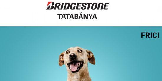 Szerető gazdára találtak a magukra maradt tatabányai menhelyi kutyák