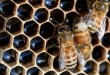 Interaktív múzeum és méhmentés: digitális innovációkat mentorál a MagentaKraft