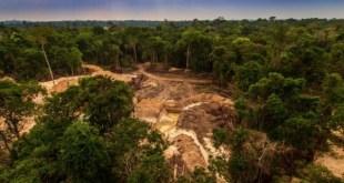Mesterséges intelligenciával és adatelemzéssel törekszenek az erdőirtás elleni küzdelemre az Amazonas védelméért.