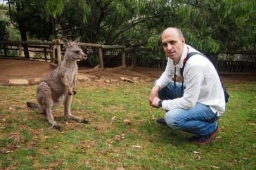 Roos - - Bonorong Wildlife Sanctury