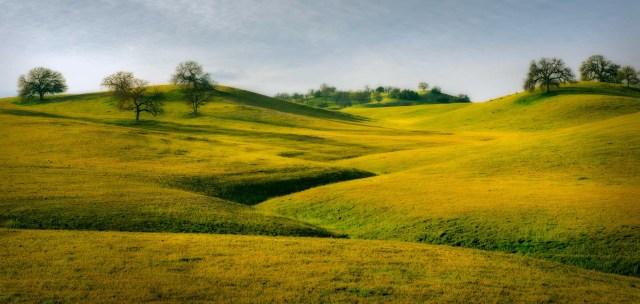Soft Pasture
