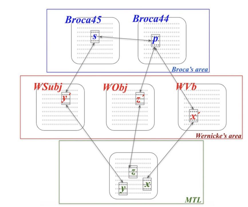 brain areas language processing