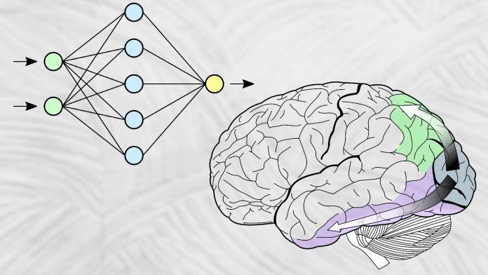 corteza visual frente a redes neuronales