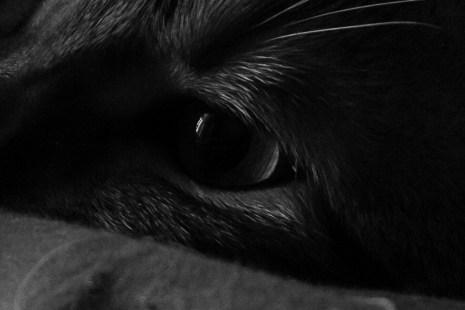 cat_eye