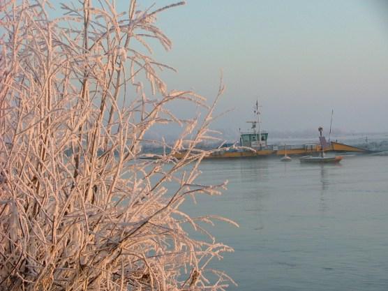 22 december 2007. Terwijl iedereen nog slaapt is de natuur langs de IJssel adembenemend mooi. Strenge vorst heeft voor een prachtige rijpafzetting gezorgd.