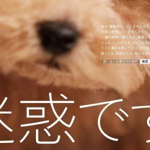 動物愛護協会×ACジャパン「その一目惚れ、迷惑です。」CM&ポスター