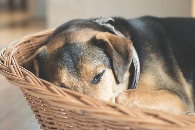 panier orthopedique pour chien quel