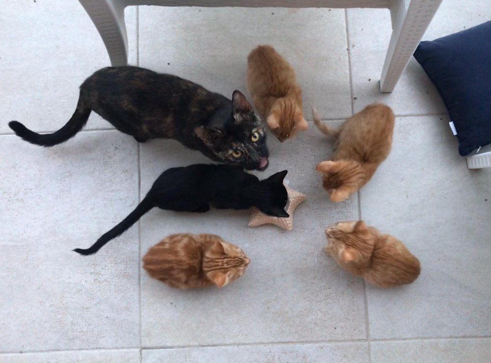 Special guests at the yoga retreat: 1 mummy cat and her 5 kittens