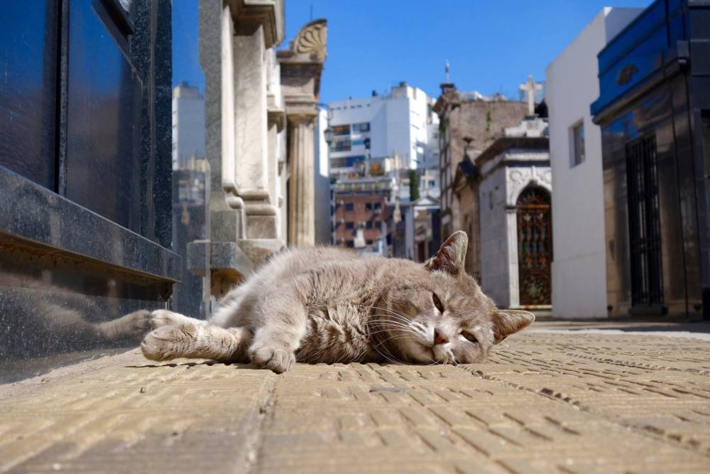 Photo of a cat sunbathing in the Recoleta Cemetary with the mausoleums in the background.