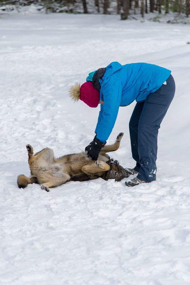 Image of me playing with a one of the stray Chernobyl dogs. The dog is lying on its back as I scratch it's belly.