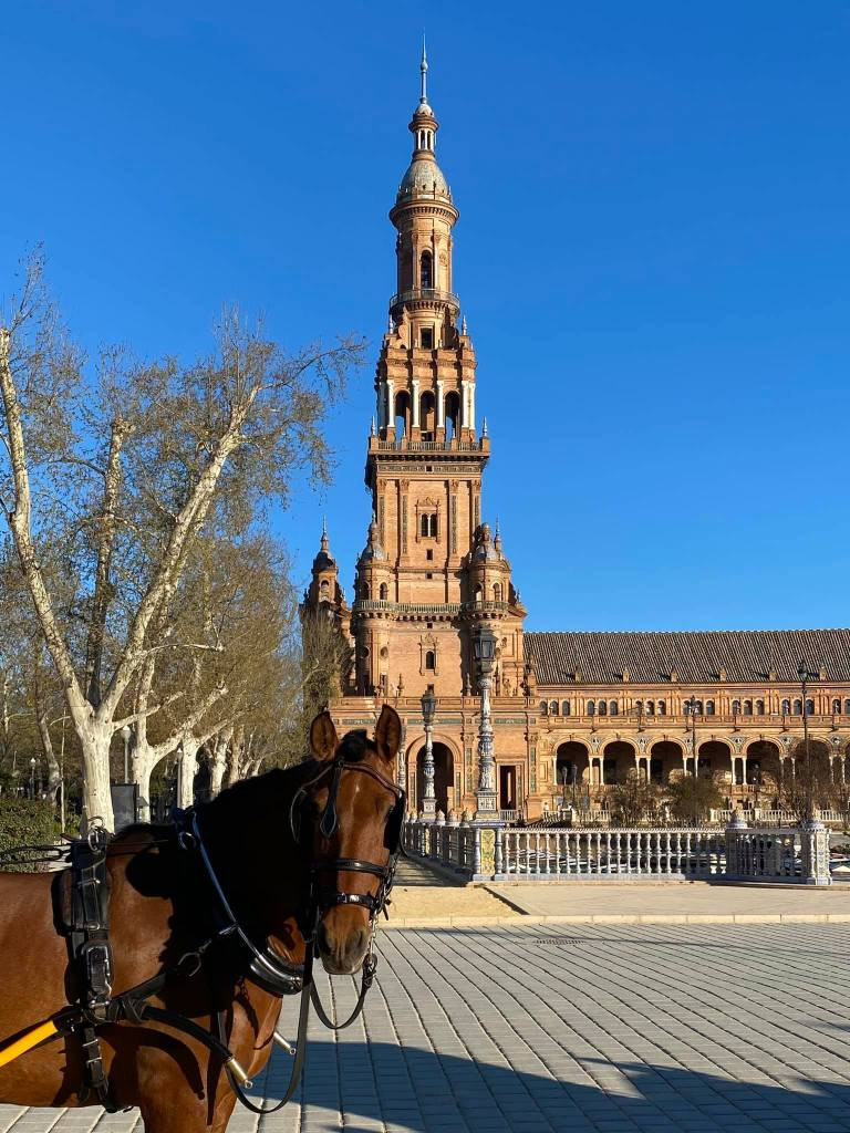 Plaza de España with the carriage horse in front of it, Seville