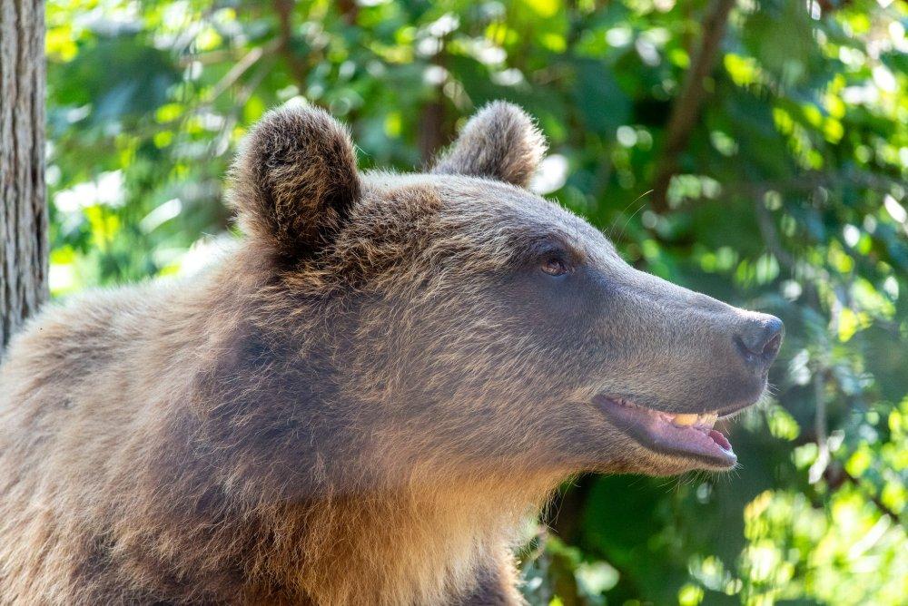 Smiling bear