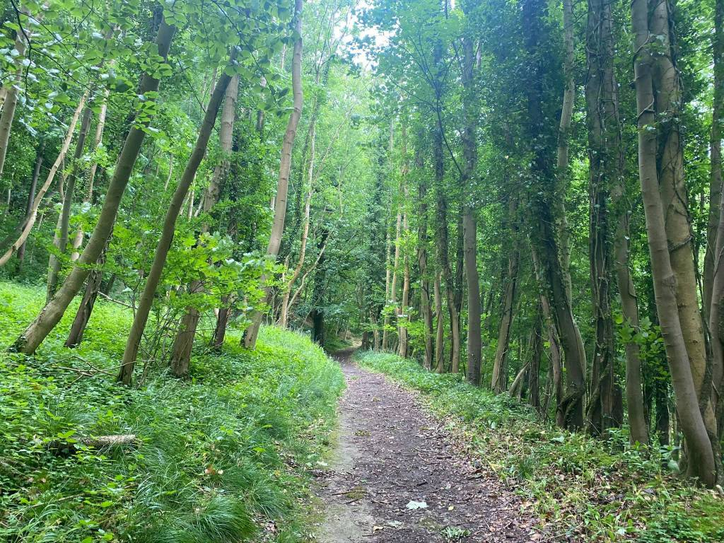 The Costwold Way cuts through a verdant forest