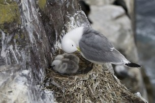 sea gull nest