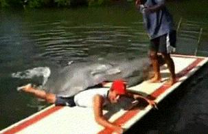 dolphin rape cave
