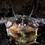 The Bobbit Worm – Uncut, Uncensored, And Underwater