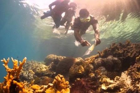 snorkel paradise new guinea beaches