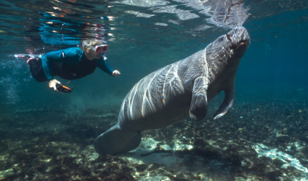 best-snorkel-spots-in-the-usa