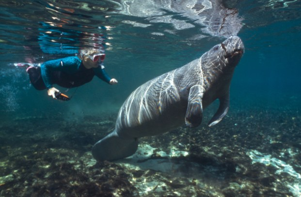 best-snorkel-spots-in-the-usa