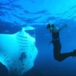 The Best Snorkeling Spots In Turkey