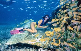 le_cameleon_snorkeling