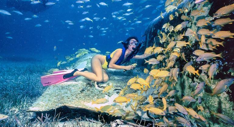le_cameleon_snorkeling