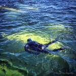 Snorkelling with Beluga Whales in Churchill, Manitoba, Canada