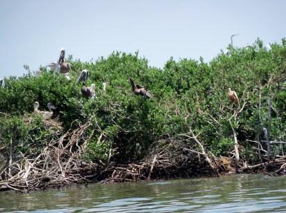 loss of bird habitat