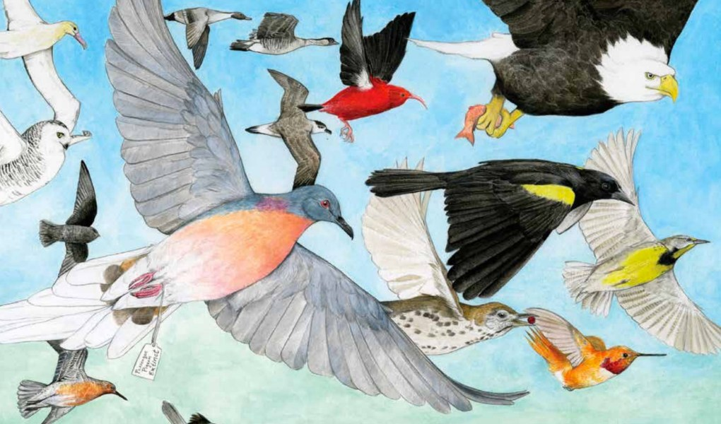 the state of birds 2014