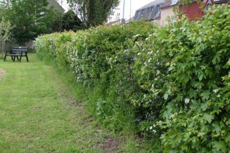 hedge bird shelter
