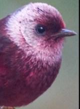 birdingsanpancho3