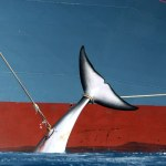 About Whale Hunting (Whaling)