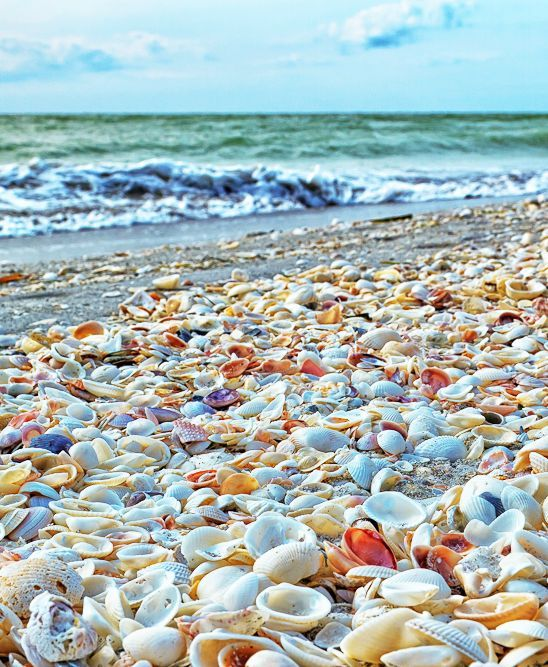 The World's Best Shelling Beaches