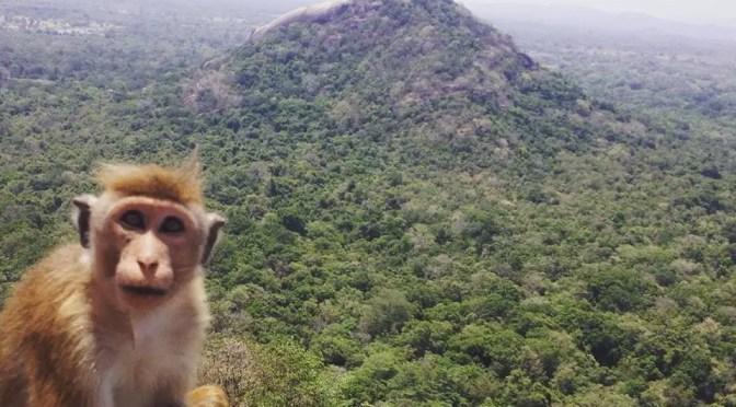 In Awe of Sri Lanka – Solo Female Travel