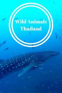 wild animals thailand