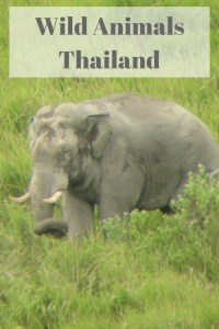 wild animals thailand